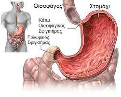 καρκινοσ στομαχου1